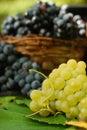 Luscious grapes Royalty Free Stock Image