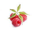 Luscious ripe red raspberries Stock Photos