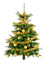 Lush christmas tree with gold baubles clean studio shot of a decorated and garland isolated on white Royalty Free Stock Photography