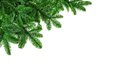 Lush fir twigs on white studio isolated as a corner ornament or border pure background Stock Images