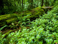 Stock Photo Lush forest