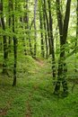 Lush forest Royalty Free Stock Photos