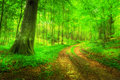 Lush forest in Denmar Royalty Free Stock Photo