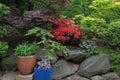 Lush Garden Backyard in Springtime Royalty Free Stock Photo