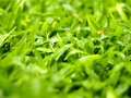 Lush grass in the morning photo of Royalty Free Stock Photos
