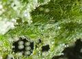 Lush green algaes under water Royalty Free Stock Photo