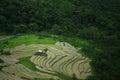 Lush green fields near a rain forest Royalty Free Stock Photo