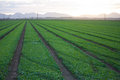 Lush green fields near Yuma Arizona Royalty Free Stock Photo