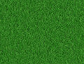 Lush green grass backgrounds Royalty Free Stock Photo