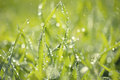 Lush green grass with falling drops Stock Images