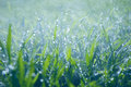 Lush green grass with falling drops Royalty Free Stock Photo
