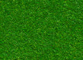 Lush green grass texture on a rock backgrounds Royalty Free Stock Photo