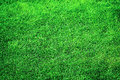 Lush Green Grassy Grass Lawn Royalty Free Stock Photo