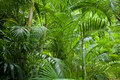 Lush green jungle background Royalty Free Stock Photo
