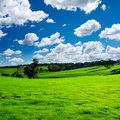 Lush Green Meadow Royalty Free Stock Photos