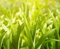 Lush green plants Stock Image