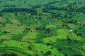 Lush green prosperous paddy fields Royalty Free Stock Photo