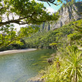 Lush green rainforest along Pororai River, NZ Stock Image