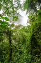 Lush green rainforest shrouded in mist Royalty Free Stock Photos