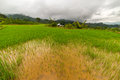 Lush green rice field expansive landscape in indonesia and bright fields mamasa region west tana toraja south sulawesi wide angle Royalty Free Stock Photos