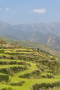 Lush green terraced mountain fields Royalty Free Stock Photo