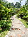 Lush green tropical retreat resort alley at khao sok lake and mountains krabi thailand Royalty Free Stock Photography