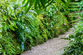 Lush green tropical vegetation along a gravel path Royalty Free Stock Photo
