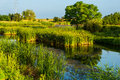 Lush green vegetation and lake in sunlight Royalty Free Stock Photography