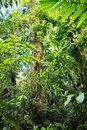 Lush green vegetation in tropical Amazon rain forest Royalty Free Stock Photo