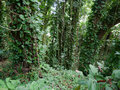 Lush jungle like vegetation Maui Hawaii Royalty Free Stock Photo