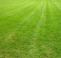 Lush lawn Royalty Free Stock Photos