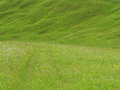 Lush green meadow in alpine upland Royalty Free Stock Photo