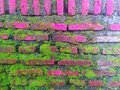 lush moss growing on the red bricks Royalty Free Stock Photo