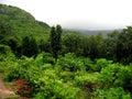 Lush rain forest Stock Image