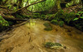 Lush Rain Forest Stream Stock Photography