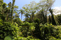 Tropical Lush Rain Forest. Royalty Free Stock Photo