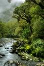 Lush rainforest Royalty Free Stock Photo