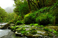 Lush rainforest Royalty Free Stock Images