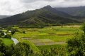 Lush taro fields as viewd hanalei lookout kauai hawaii Royalty Free Stock Photo