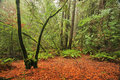 Lush temperate rain forest Stock Images