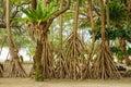 Lush Vegetation - Efate Island Royalty Free Stock Photo