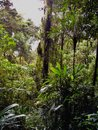 Lush vegetation on a trail in the rain forest Royalty Free Stock Photo