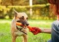 Lustiger hund mit einem stock in seinem mund Lizenzfreie Stockbilder