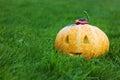 Lustiger kürbis halloweens mit einem lächeln im grünen gras des herbstes Stockfoto