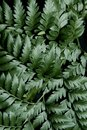 Lustrous green leaves at night Royalty Free Stock Photo
