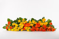 Luxury bouquet of orange and yellow roses on white background Stock Photography