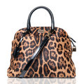 Luxury leopard female bag Stock Photos