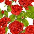 Luxury seamless pattern of red roses Royalty Free Stock Image