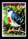 Luzon Bleeding-heart Gallicolumba luzonica, Asian birds serie, circa 1976 Royalty Free Stock Photo