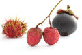 Lychee rambutan and mangosteen Royalty Free Stock Images